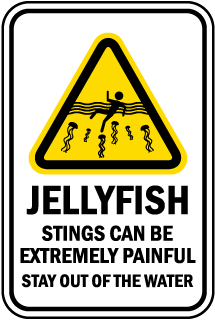 Jellyfish Sting Can Be Painful Sign